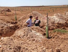 Plantación intensiva de olivar y puesta en riego por goteo
